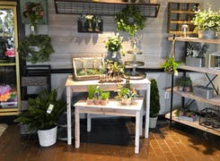 Gorgeous flower and plant arrangements in a wide range of pots and baskets